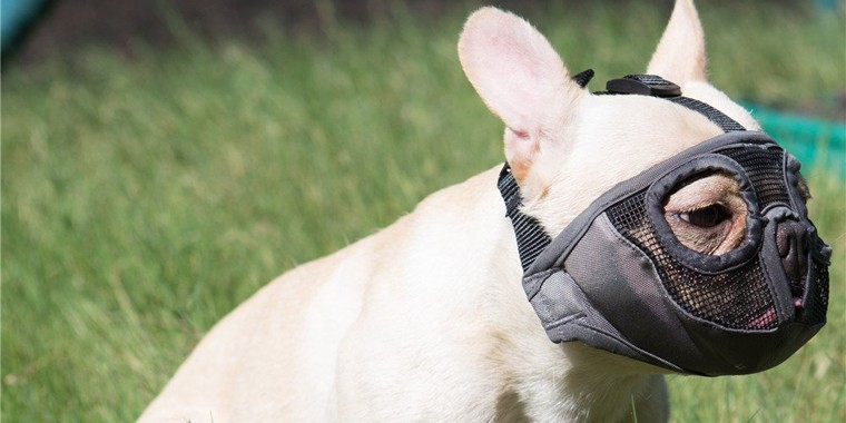 JYHY Short Snout Dog Muzzles