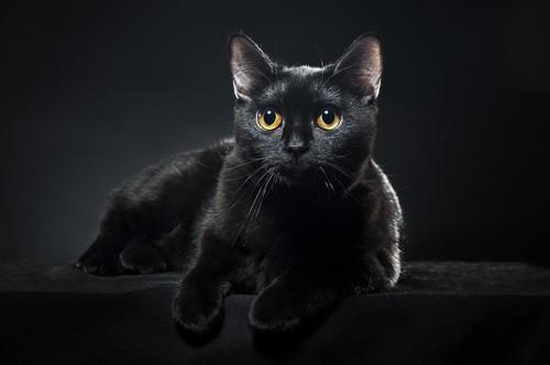 black cats history